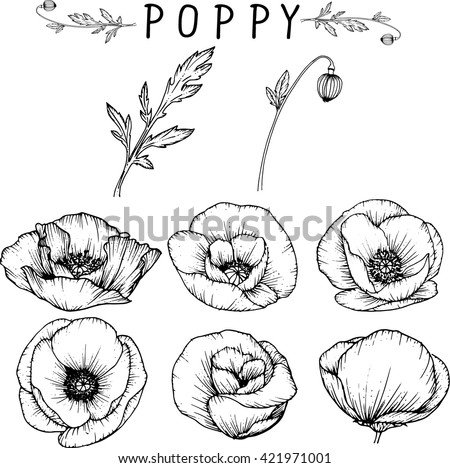 Poppy flowers download free vector art stock graphics images poppy flowers drawings vector mightylinksfo