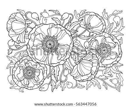poppy flowers  floral pattern