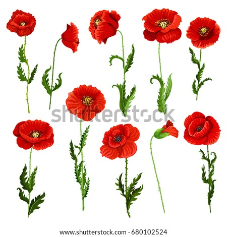 poppy flowers icons set vector