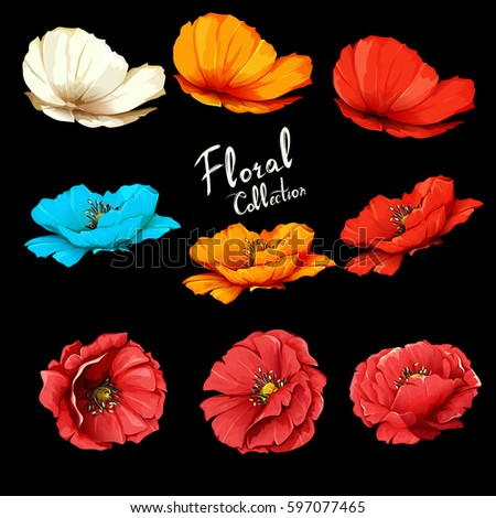 poppy flowers illustration of