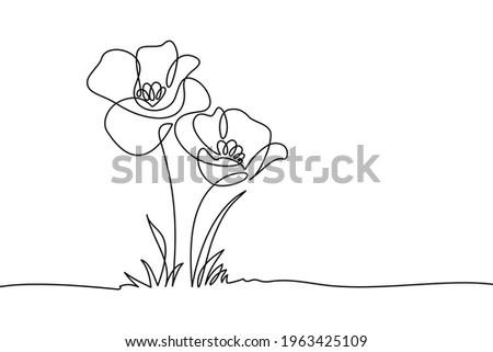 poppy flowers in continuous