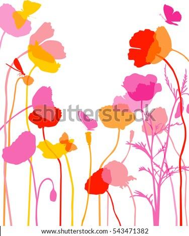 poppy illustration