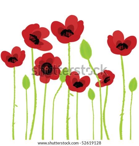stock-vector-poppy-over-white-background-52619128.jpg