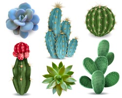 Popular indoor plants elements and succulents rosettes varieties including pin cushion cactus realistic collection isolated vector collection