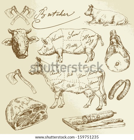 pork and beef cuts   hand drawn ...