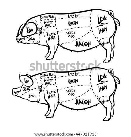 Food Hog Vectors likewise 258552701 Shutterstock additionally What Part Of The Cow Does Corned Beef  e From besides Pork meat cuts stickers also Mutton chop. on cuts of bacon diagram