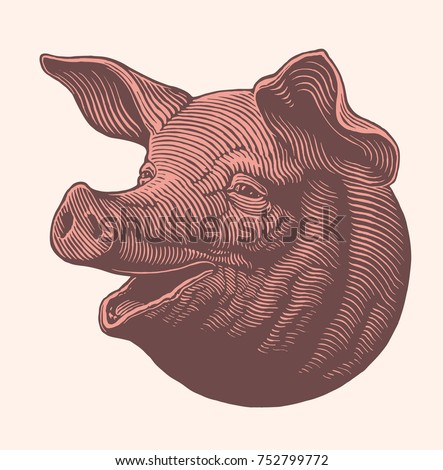Pork head. Hand drawn engraving. Vector vintage illustration. Isolated on light background. 8 EPS