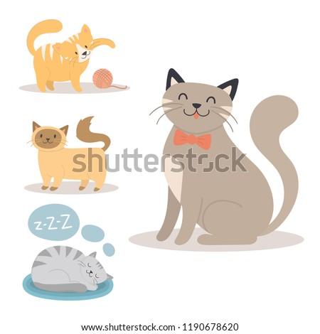 portrait cat animal sleep pet