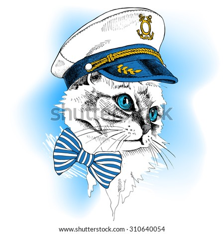 portrait cat in a sailor's cap
