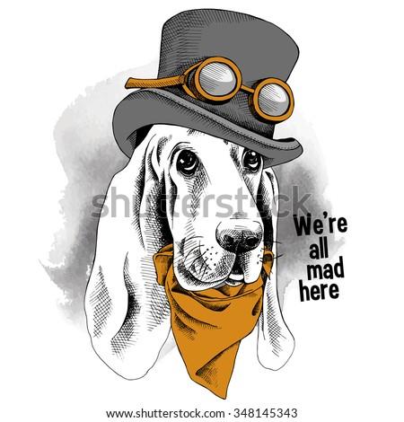 portrait funny dog basset hound