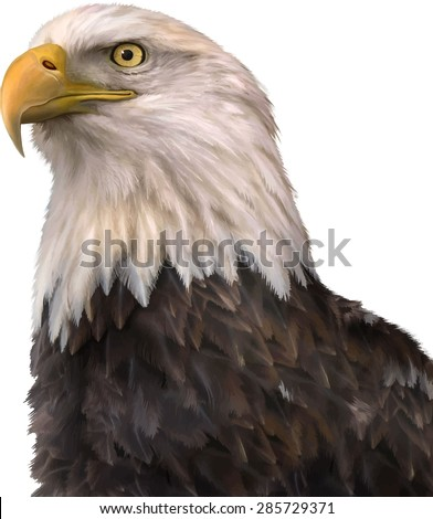 portrait of a bald eagle  lat