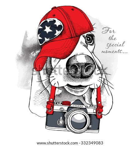 Portrait of a dog Basset Hound in red cap with camera. Vector illustration.