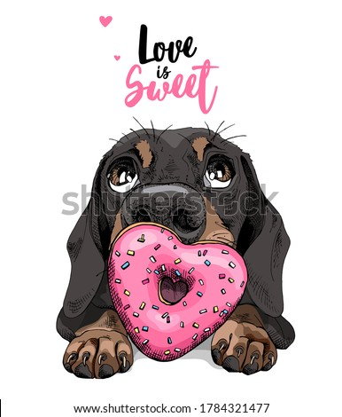 Portrait of a funny Dachshund dog with pink heart Donut. Love is sweet - lettering quote. Humor card, t-shirt composition, hand drawn style print. Vector illustration. Сток-фото ©