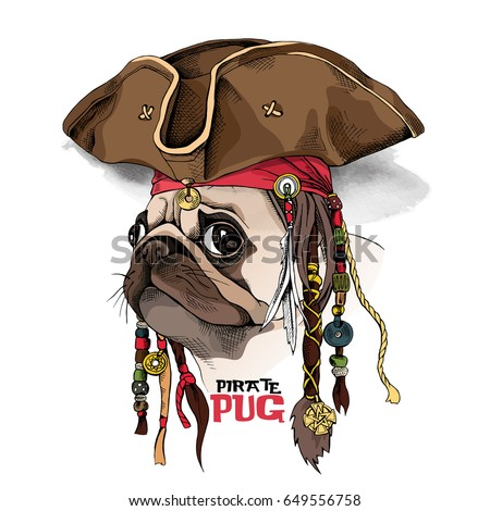 Portrait of a Pug in Pirate hat, bandana and with a dreadlocks. Vector illustration.