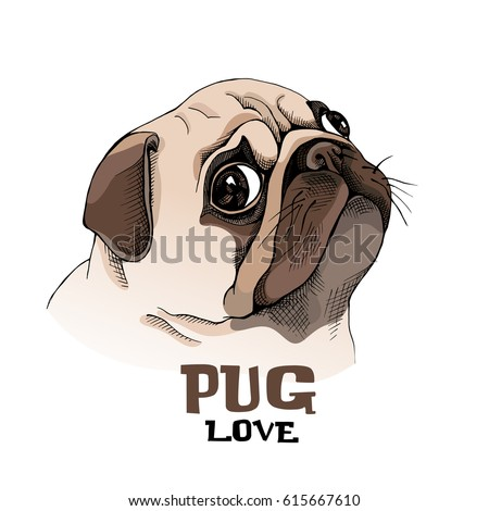 portrait of a pug puppy in