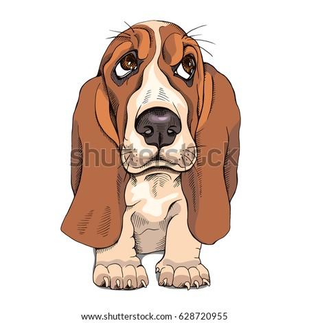 portrait of a puppy basset