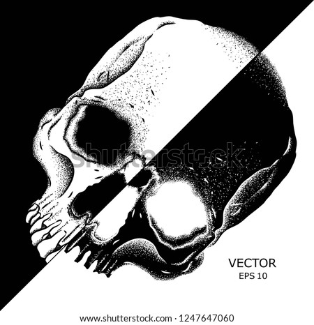 portrait of a skull with a