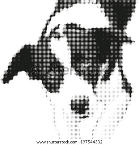 portrait of dog   in dotted
