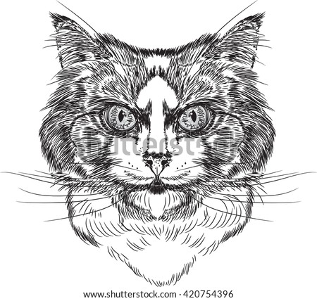 how to draw a long haired cat