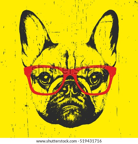 portrait of french bulldog with
