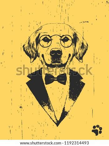 portrait of golden retriever in