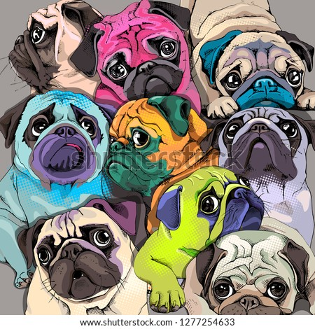 Portrait of many pugs. Composition in a bright coloring Pop Art style. Humor card, t-shirt composition, hand drawn style print. Vector illustration. Сток-фото ©