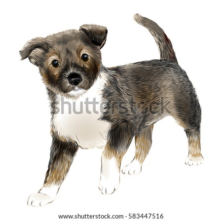 portrait of the  cute puppy