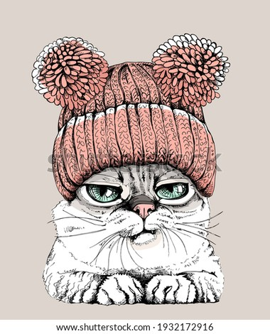 portrait of the funny cat in