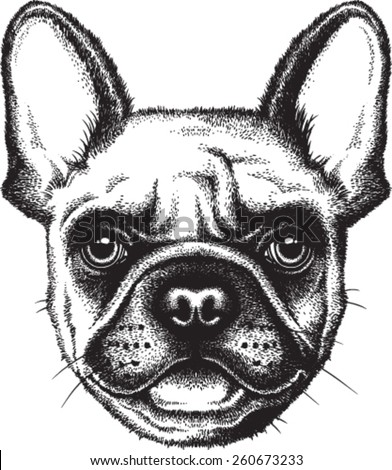Portrait sketch of a French Bulldog or Frenchie Vector illustration
