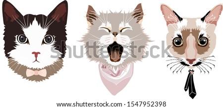 portraits of three cats  a cat