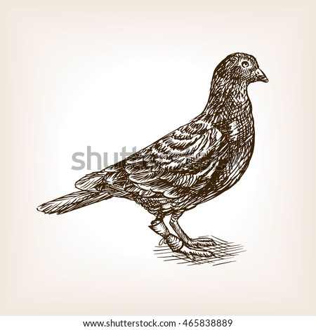post pigeon sketch style vector