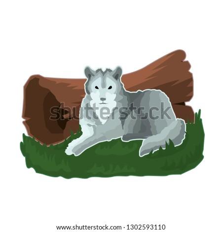 postcard gray calm wolf who