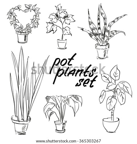 house plants drawing. detail pot plants set vector illustration flowers in pots drawn black line on a white background house drawing w