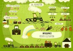 Potato cultivation, infographics. Vector.
