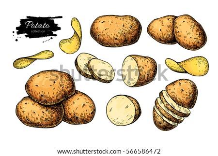 potato drawing set vector