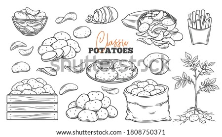 Potato products outline icons set. Engraved drawn monochrome chips, pancakes, french fries, whole root potatoes for farm market and shop design. Vector illustration of harvest vegetables. Foto stock ©