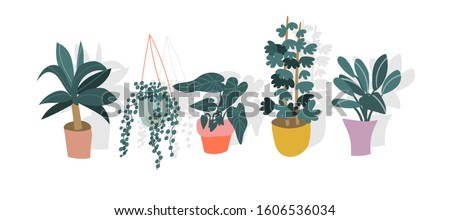 potted plants collection. succulents and house plants. hand drawn vector art.  Set of house indoor plant vector.