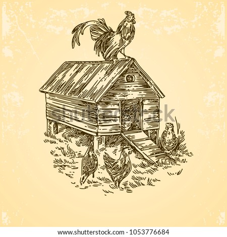 Poultry farm. Chicken coop with rooster and hens. Engraving style. Vector illustration.