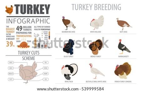 Diagram Of Turkey Breeds - Electrical Work Wiring Diagram •