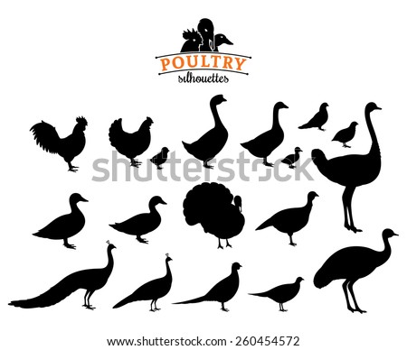 poultry silhouettes isolated on