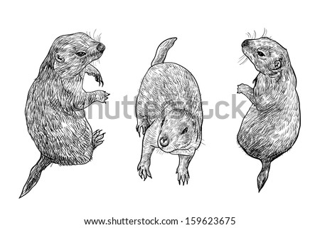 prairie dog in three poses