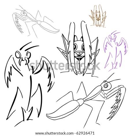 Praying Mantis Scientific Drawing Praying Mantis Drawings