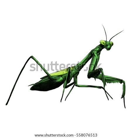 praying mantis insect vector
