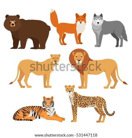 Predatory animals set wolf bear fox tiger lion cheetah isolated