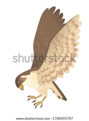 predatory bird cute adult