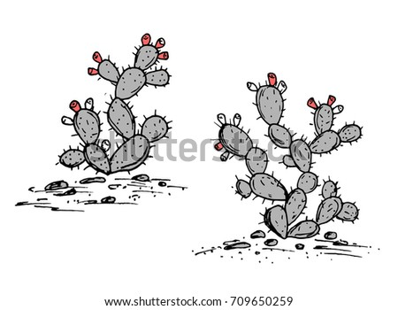 Prickly Pear vector. Opuntia ficus indica sketch. Prickly pear cactus with ripe fruits, two plants set. Hand drawn illustration in stylish color palette.