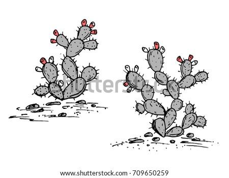 prickly pear vector. opuntia...