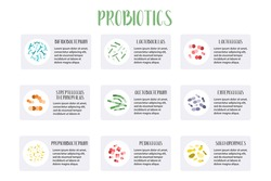 Probiotics infographic. Lactic acid bacteria. Good bacteria for gut and intestinal flora health. Microbiome. Bifidobacterium, lactobacillus, lactococcus, thermophilus streptococcus. Vector set