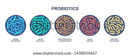 Probiotics. Lactic acid bacterium. Bifidobacterium, lactobacillus, streptococcus thermophilus, lactococcus, propionibacterium Microbiome. Microbiota. Bacteriology. Gastrointestinal health. Vector