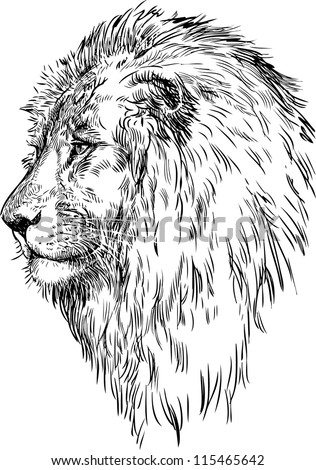 profile of a lion stock vector illustration 115465642